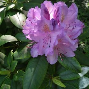Offrez-vous des plantes et découvrez l'Institut Redouté-Peiffer
